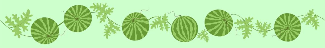 Green watermelons. Royalty Free Stock Photo