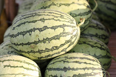 Green Watermelons. Royalty Free Stock Images