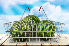 Green watermelons in the shopping basket at wood table with blue cloudy sky bokeh background. Organic vegetarian food. Stock Image