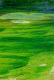 Green waterweeds. The green waterweeds are floating in clear stream Royalty Free Stock Image