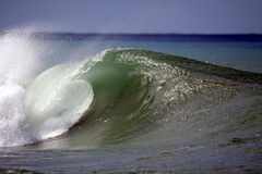 Green Wave. A beautiful green wave breaks along the shore in Hawaii Royalty Free Stock Photography