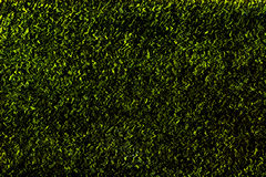 Green wavy abstract texture Royalty Free Stock Image