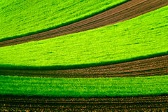 Green wavy field in South Moravia Stock Photography