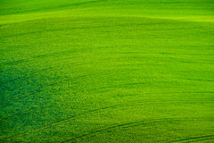 Green wavy hills in South Moravia Royalty Free Stock Image