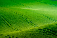Green wavy hills in South Moravia Stock Photos