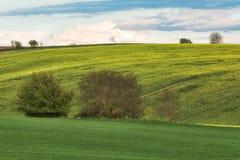 Green wavy hills in South Moravia, Csezh Republic. Green wavy hills in South Moravia, Csezh Royalty Free Stock Photo