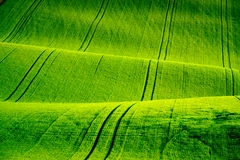 Green wavy hills in South Moravia Royalty Free Stock Photos