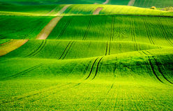 Green wavy hills in South Moravia Royalty Free Stock Photography