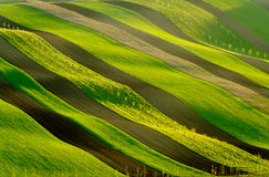 Green wavy hills in South Moravia Royalty Free Stock Images