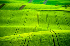 Green wavy hills in South Moravia Royalty Free Stock Photo