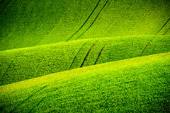 Green wavy hills in South Moravia Stock Photography