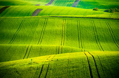 Green wavy hills in South Moravia Stock Image