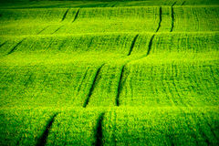 Green wavy hills in South Moravia Stock Photo