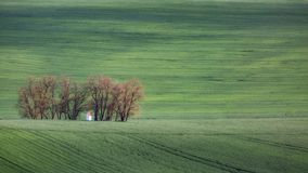 Green wavy hills in South Moravia, Csezh Republic. Green wavy hills in South Moravia, Csezh Stock Images