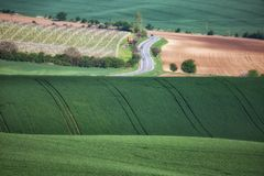 Green wavy hills in South Moravia, Csezh. Republic Royalty Free Stock Photography