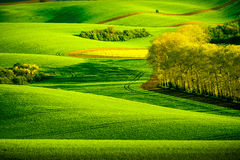 Green wavy hills in South Moravia Stock Images