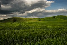 Green wawes of Tuscan Lanscape - Toscana, Tuscany, Italy Royalty Free Stock Photography