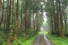Green way. Stock Image