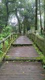 The green way. The bridge in the forest @ Chaingmai province Thailand Stock Photos