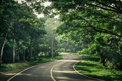Green way Royalty Free Stock Images