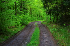 Green way Royalty Free Stock Photography