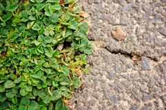 Green weed Royalty Free Stock Photography