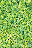 Green Weed Background. Stock Photos