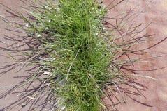 Green weeds close-up Stock Photos