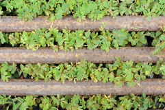 Green weeds and rusting steel bar Stock Photo