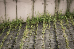 Green weeds on sidewalk. Sidewalk with green weeds next to a barrier stock photo