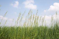 Weeds in the meadow. Green weeds in wild pasture stock photos
