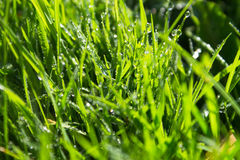 Green wet grass background Stock Photo