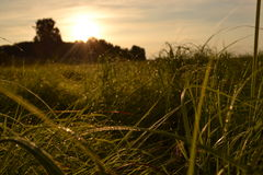 Green wet grass Stock Image