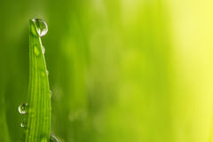 Green wet grass with dew on a blades Stock Image