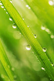 Green wet grass with dew on a blades Stock Photography