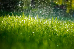 Green wet grass. One sommer moning and green wet grass Stock Photography