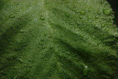Green wet leaf Stock Image