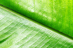 Green wet leaf close up Royalty Free Stock Photo