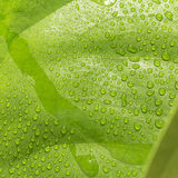 Green wet leaf macro abstract detail Stock Images