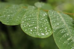 Green leave in the jungle stock photography