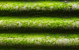Green wet moss. Green moss grows on the roof from moisture Royalty Free Stock Images