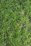 Green wet moss on road Royalty Free Stock Photography