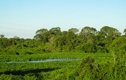 Green wetland, river and trees Stock Image