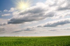 Green wheat and beautiful blue sky. Royalty Free Stock Photos