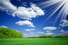 Green wheat and beautiful blue sky with sun. Stock Photography