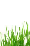 Green wheat border Stock Images