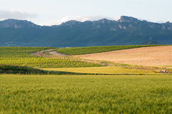 Green wheat cereal fields view, and cloudy sky Royalty Free Stock Images