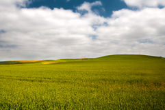 Green wheat cereal fields view, and cloudy sky Stock Photos