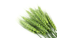 Green wheat ears Stock Photo