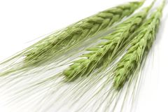 Green wheat ears. Isolated on white Royalty Free Stock Images